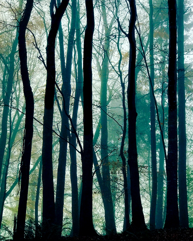 The Enchanted Forest z.jpg