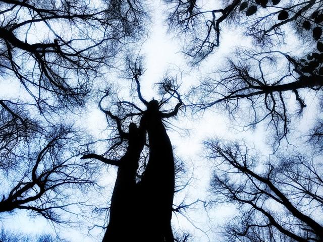 Trees dancing 2018 1 z.jpg
